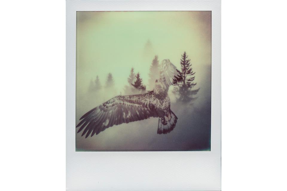 JakobLang_ArtIsNotImpossible_Polaroid_EagleInTrees_2014