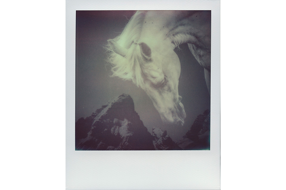 JakobLang_ArtIsNotImpossible_Polaroid_HumbleHorse_2014